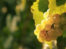 Винный гид: подбираем сорт вина, исходя из учительских проблем